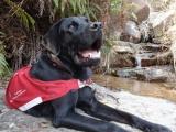 <h5>Tobi 小檔案</h5><p>品種: 拉布拉多 性別: 男 出生日期: 2012年7月 出生地: 日本 來源: 由日本關西盲導犬協會送贈 個性: 友善、聰明、活潑 志願 : 成功訓練為導盲犬服務視障人士</p>