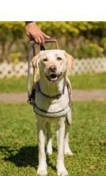<h5>Yoyo 小檔案</h5><p>品種: 拉布拉多 性別: 女 出生日期: 2013年3月 出生地: 台灣 來源: 由台灣導盲犬協會送贈 個性: 活潑、可愛、溫馴、穩定 志願 : 成功訓練為導盲犬服務視障人士</p>