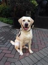 <h5>Billy 小檔案</h5><p>品種: 拉布拉多 性別: 男 出生日期: 2013年8月 出生地: 台灣 來源: 由台灣導盲犬協會送贈 個性: 活潑、開朗、溫馴 志願 : 成功訓練為導盲犬服務視障人士</p>
