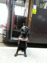 <h5>Fraser 小檔案</h5><p>品種: 拉布拉多 性別: 男 出生日期: 2014年7月 出生地: 英國 來源: 由The Guide Dog For The Blind Association UK 送贈 個性: 友善、穩定、沉實 志願 : 順利完成訓練帶領視障人士安全走路</p>