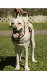 <h5>Walker 小檔案</h5><p>品種: 拉布拉多 性別: 男 出生日期: 2012年9月 出生地: 日本 來源: 由日本關西盲導犬協會送贈 個性: 聰明、穩重、好靜、文靜 志願 : 成功訓練為導盲犬服務視障人士</p>