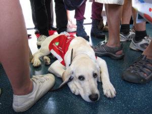 導盲犬進入公共場所